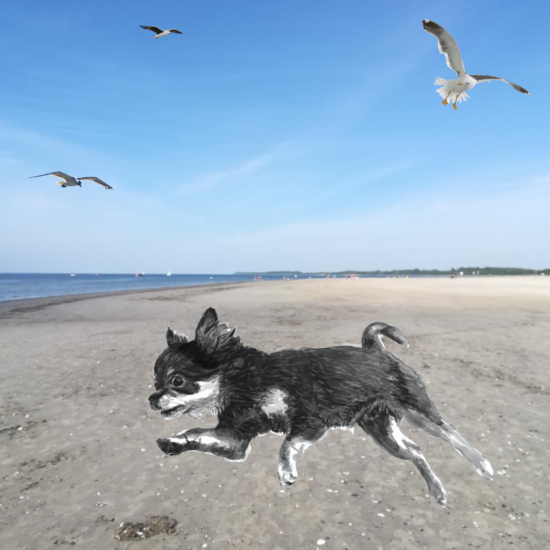 Meerblick zu vermieten: Ostsee-Roman mit Herz und Hund