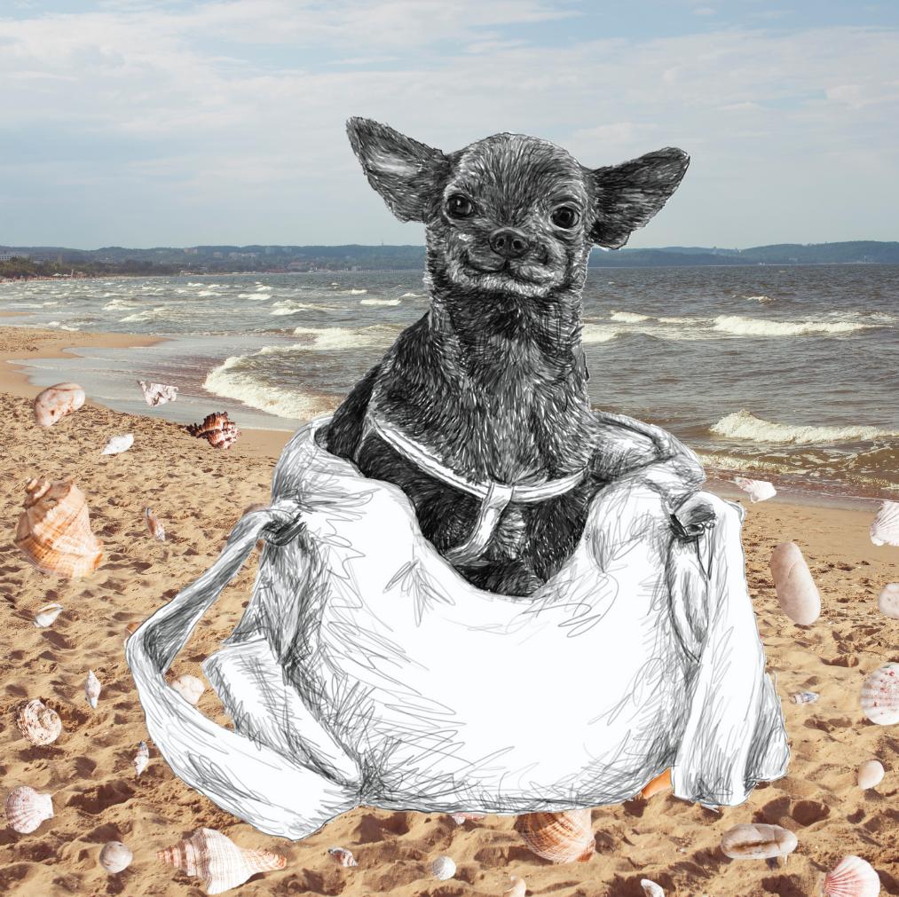 Meerblick zu vermieten: Lesestunden mit Ostsee-Feeling