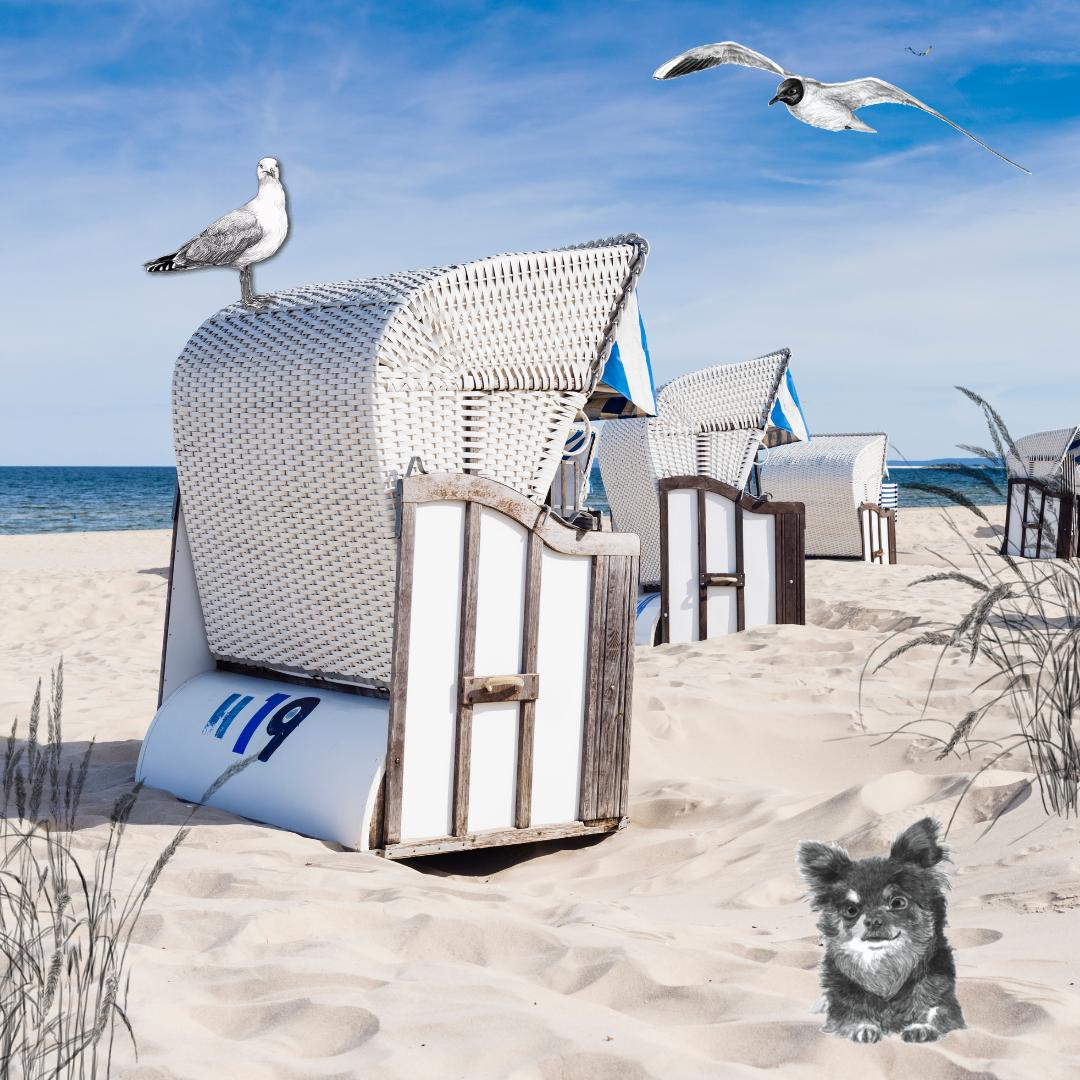 Meerblick zu vermieten: der Ostsee-Roman mit Herz und Hund